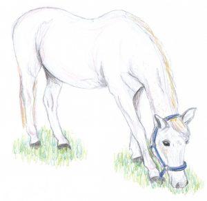 Zeichnung unsere Pferdes