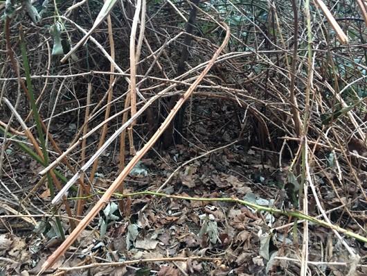 Versteck zwischen Zweigen im Wald