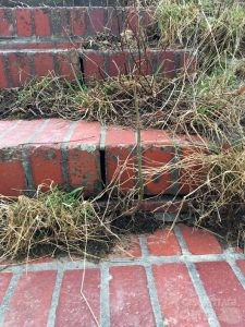 gemauerte, halb überwucherte Treppe mit kaputten Fugen für Verstecke
