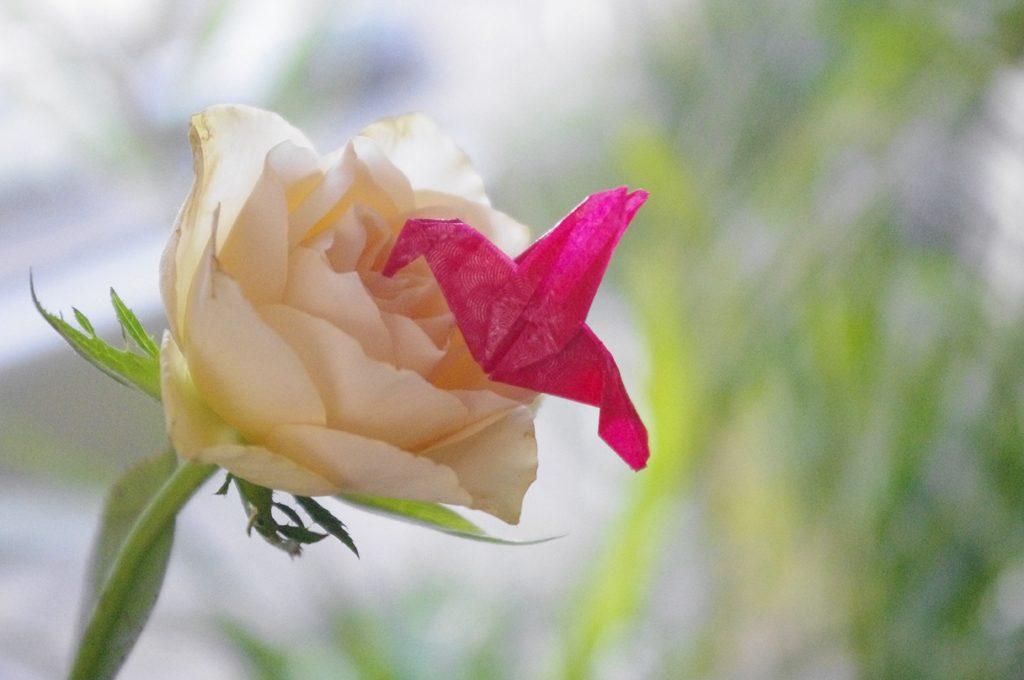 Ein roter Mini-Origami Kolibri aus Glanzpapier steckt den Schnabel in die Mitte einer weißen Rosenblüte.