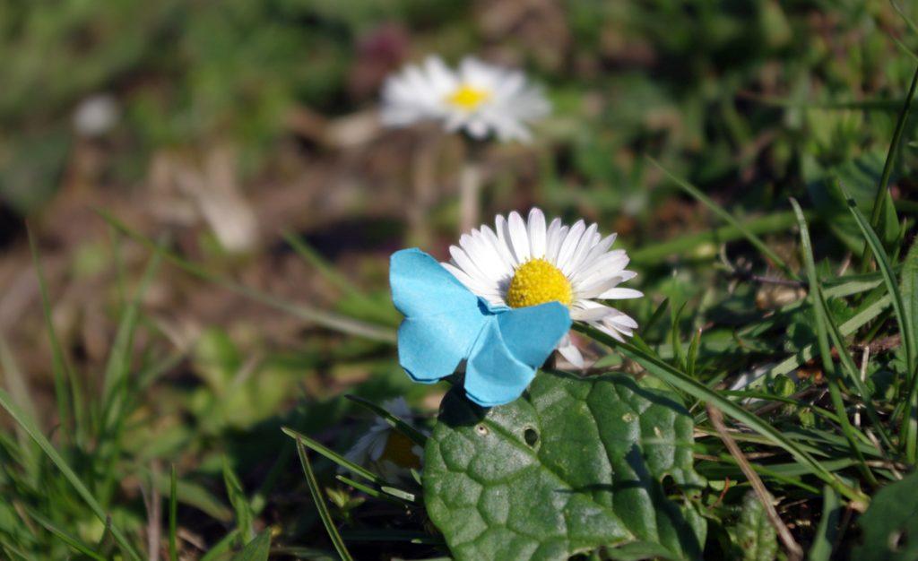 Ein blauer Mini-Origami-Schmetterling sitzt auf einem Gänseblümchen.