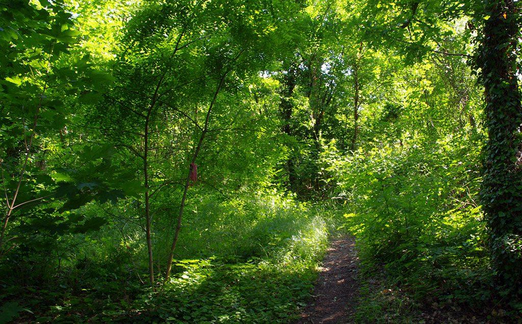 Ein Trampelpfad führt durch einen Wald im Sommer. links hängt ein einem schmalen Stamm eine rote Schleife, die im satten Grün kaum auffällt.