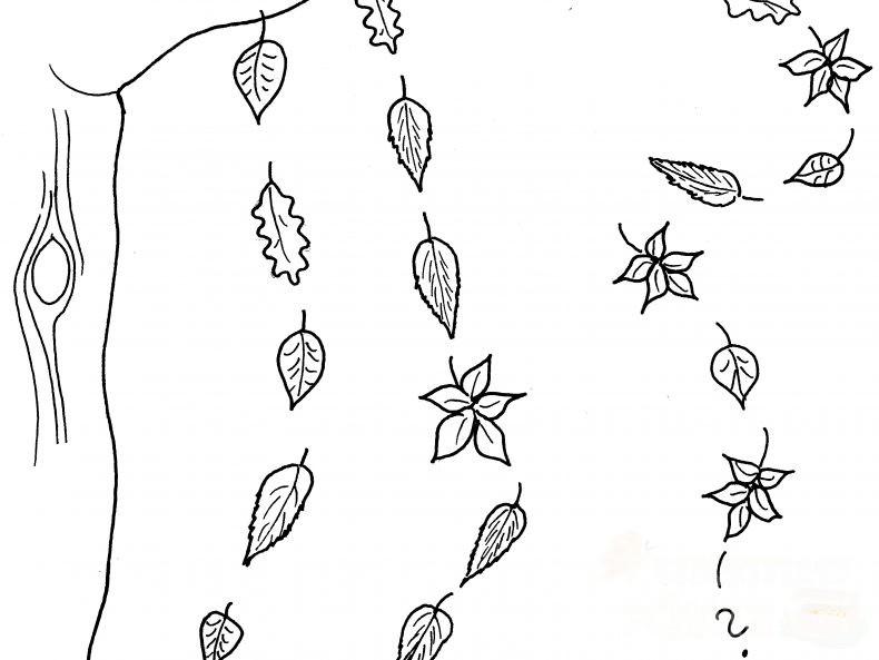 Ausmalbild. Verschiedene Blätter fallen von einem Ast.
