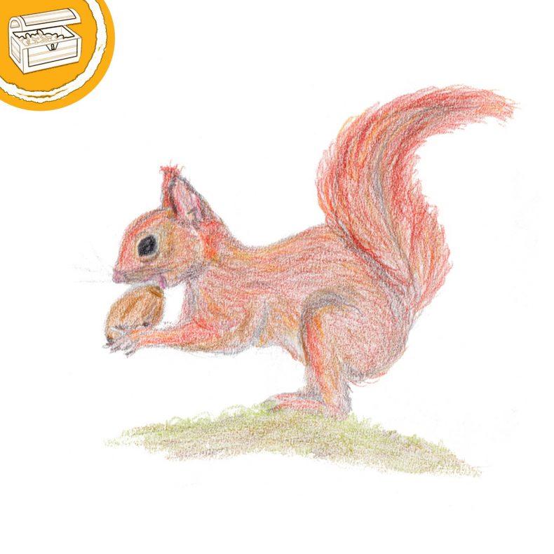 Buntstift-Illustration: Eichhörnchen kaut auf einer Eichel. Symbol oben links: Halber Kreis mit einer Schatztruhe.